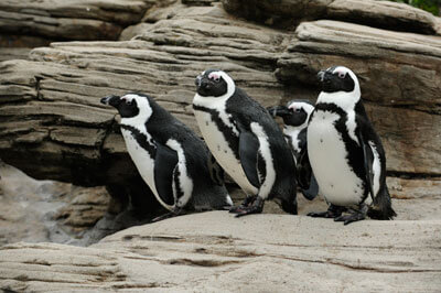 sip for the sea penguins