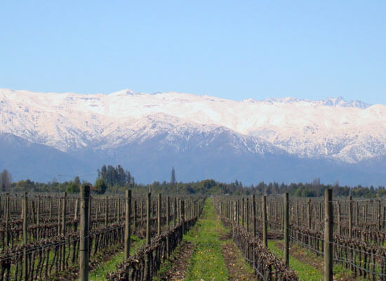 Chile's Maipo has Been Voted #3 Wine Destination Worldwide