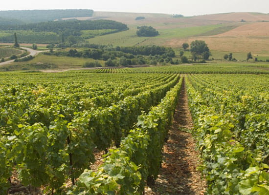 The 2014 Champagne Harvest Dates Announced