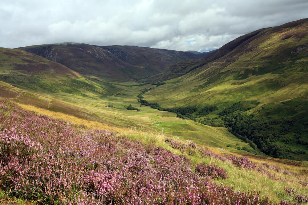Caorunn Heather Field
