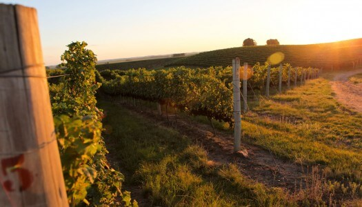 Exploring the Wines of Brazil