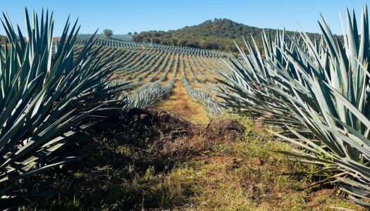 "Mexico's ""Tequila Trail"" – A How-to Guide for Visiting Tequila Country"