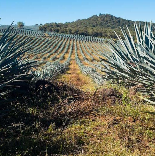 """Mexico's """"Tequila Trail"""" – A How-to Guide for Visiting Tequila Country"""