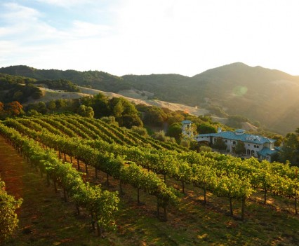 Robin Williams Estate Vineyard View