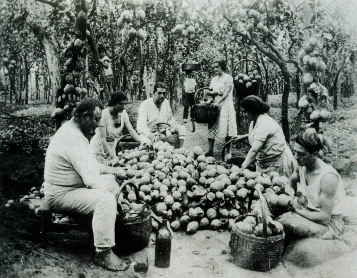 Villa Massa family in lemon orchard