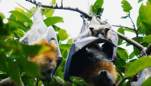 BACARDÍ Installs Bat Caves at Bottling Plant to Save Bats