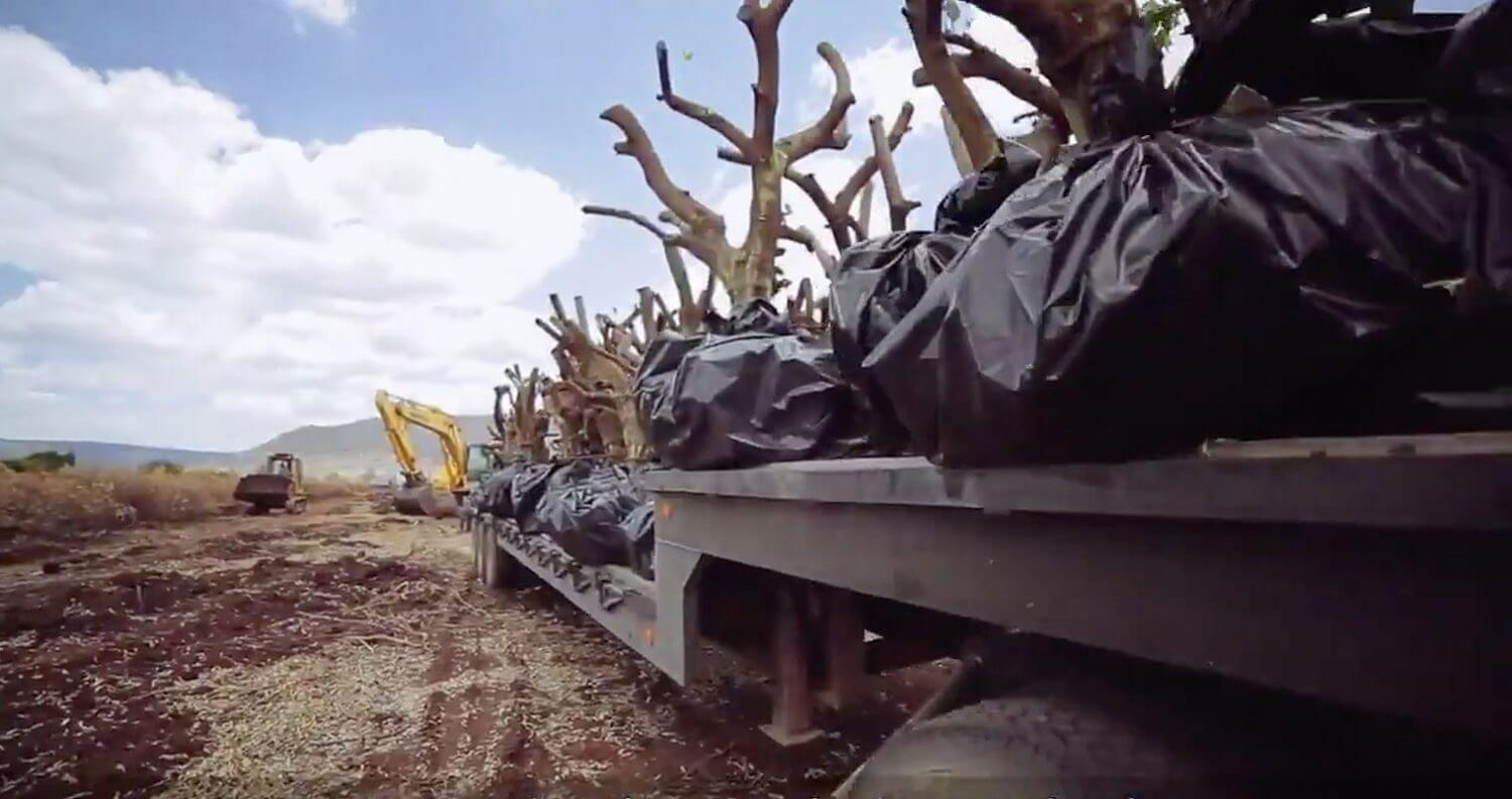 Patrón Tequila Helps Relocate 3,000 Lime Trees, featured image