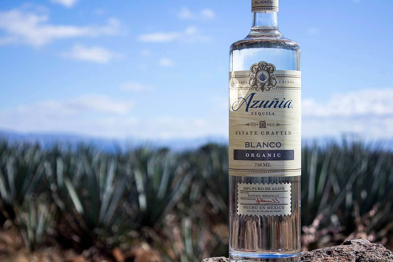 Tequila Blanco Organic, bottle display in front of agave field