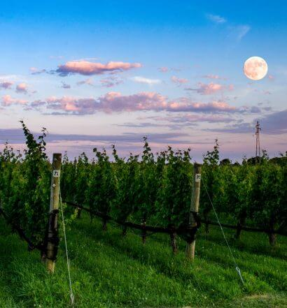 Shinn Estate Vineyard at dusk with moon, featured image