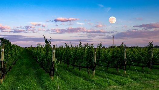 For Vegan Wine on Long Island, Visit Shinn Estate Vineyard