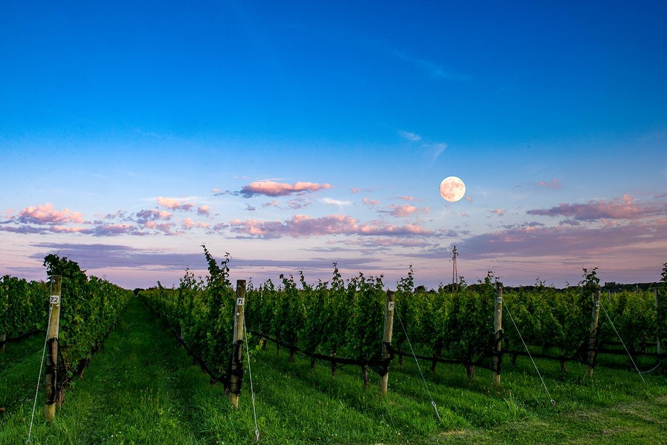 Shinn Estate Vineyard at dusk with moonlight
