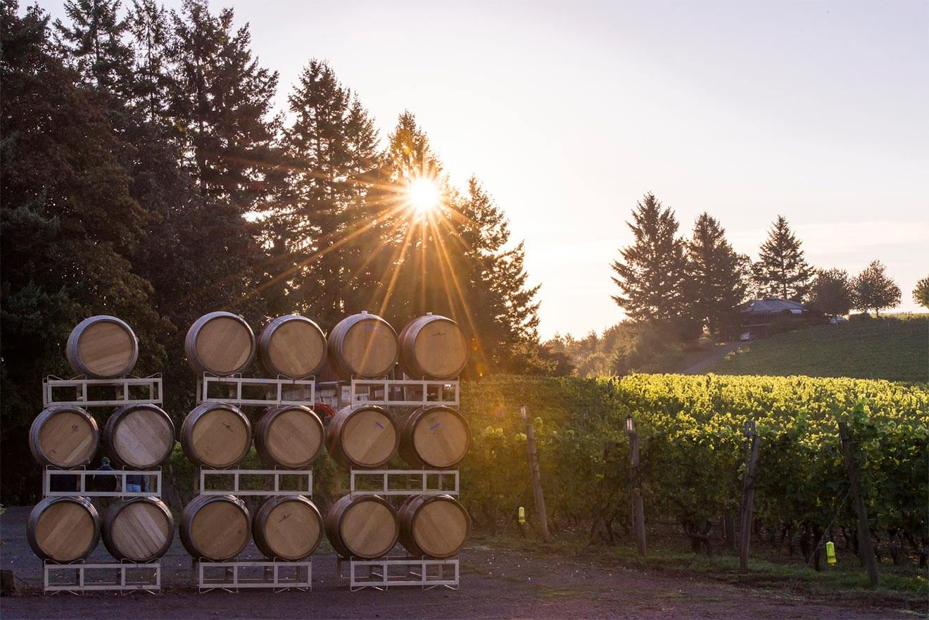 Sun Setting in Kramer Vineyards, barrels