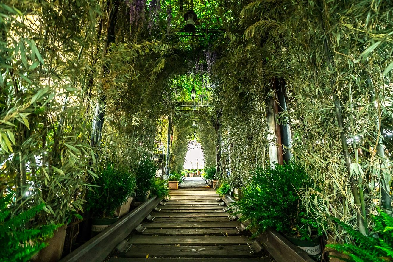 Gallow green entrance with thick vegetation, bamboo