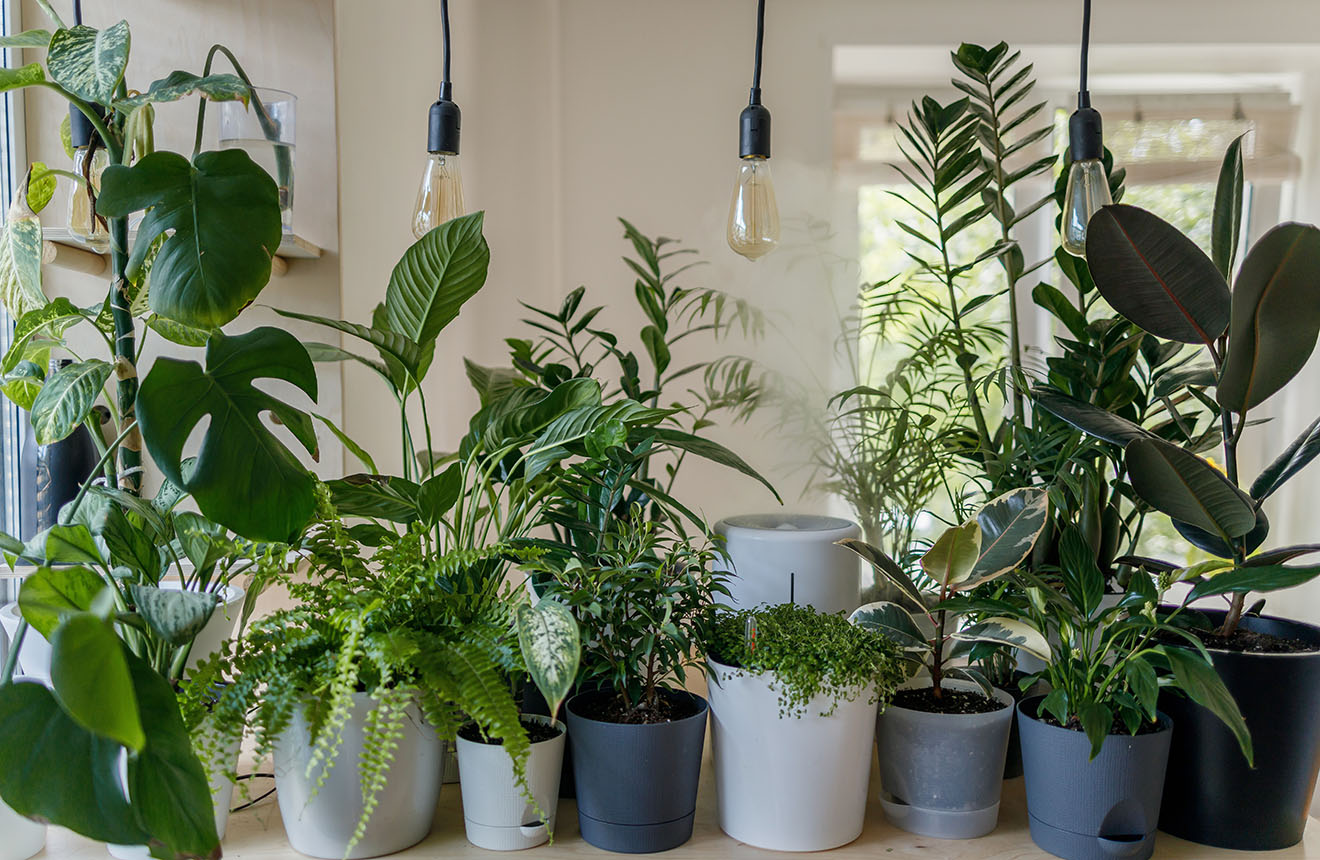 Mix of house plants