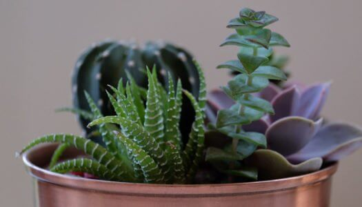 6 Bar-Approved Plants