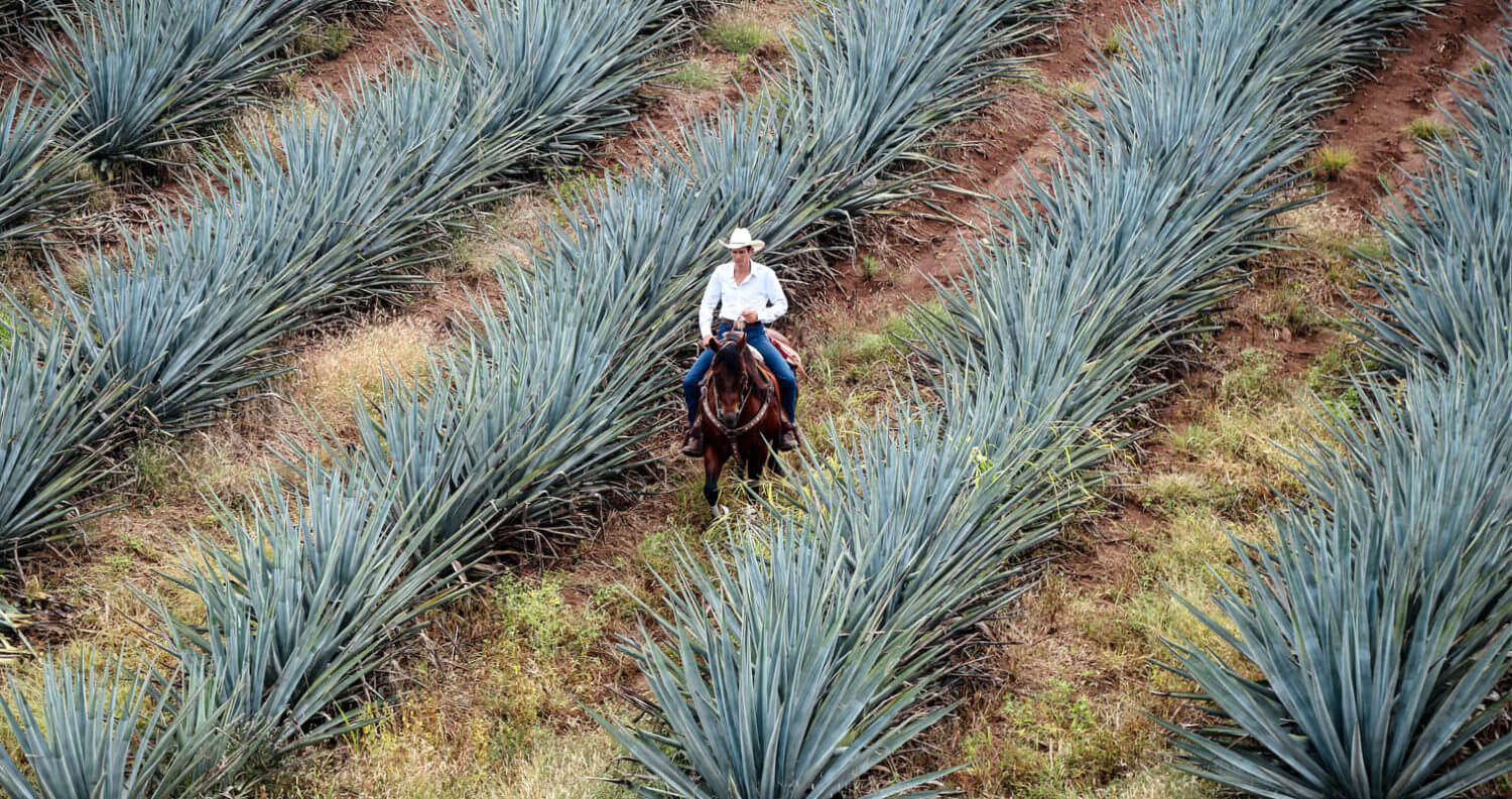 Jimador Riding Through Agave Farm, featured image