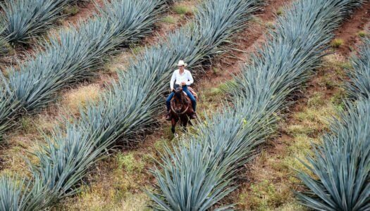 Mexican Spirits – Get To Know Agave