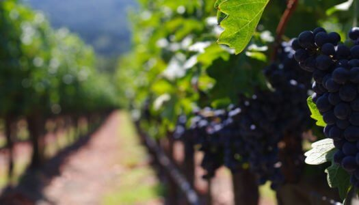 Everything You Need To Know About Cabernet for International Cabernet Day