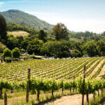 California Wine Country featured image