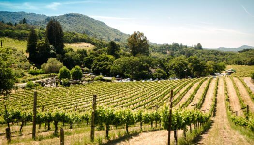 Get To Know California Wine for California Wine Month