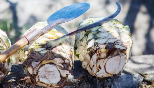 Avila–The Agave Spirit You Need For Fall
